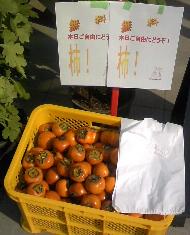 柏の葉産の柿です。 日本発!柏のオーガニック女性専用岩盤浴Stone Spa GAIA