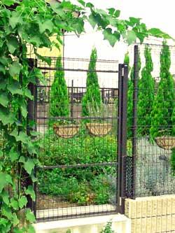 ガイアガーデンの自然栽培 はやと瓜