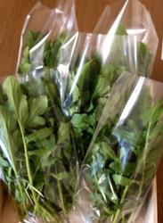 自然栽培のルッコラプレゼントします。by Stone Spa GAIA