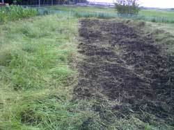 自然栽培に取り組む流山の畑で除草作業中