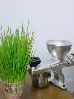 岩盤浴ガイアの自然栽培の小麦若葉と青汁しぼり器