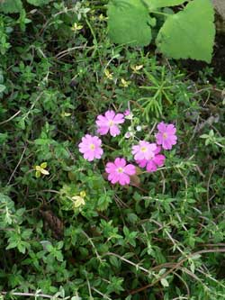 柏の葉キャンパス徒歩6分の場所にあるガイアガーデンのタイムの花です。