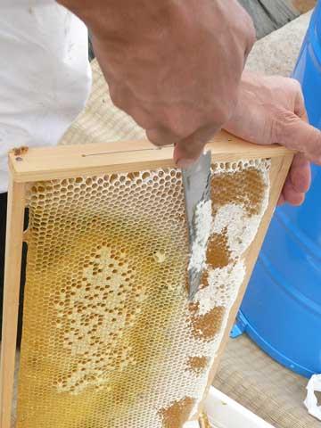 西洋みつばちの蜂蜜採取の風景 by Stone Spa GAIA