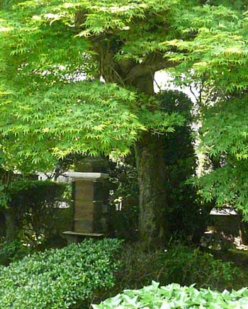 樹齢200年のもみじの木と日本みつばち by Stone Spa GAIA