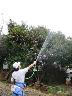 木の上に散水して巣に戻るようにしています。 by Stone Spa GAIA