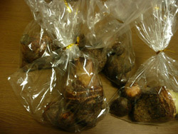 無農薬栽培の里芋です。 日本発!柏のオーがにっう女性専用岩盤浴Stone spa GAIA