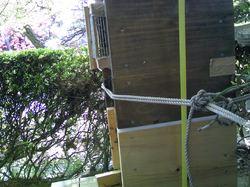 第二分封した巣箱